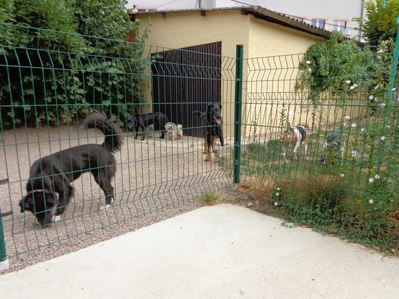 pension-chien