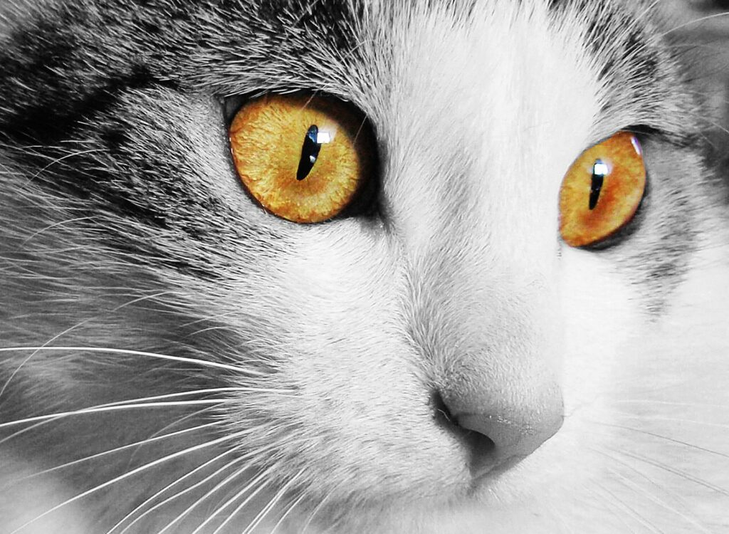 Mon chat n'urine plus : une urgence absolue